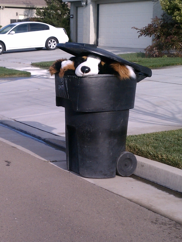 cute puppy in garbage