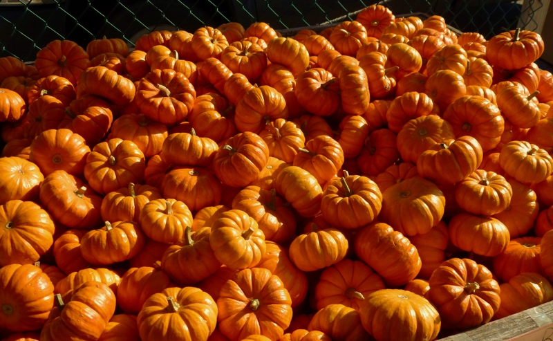Pumpkins   HomeRome 410-530-2400