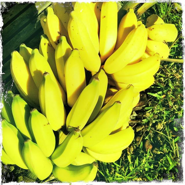 What does Food Security mean to you? bananas