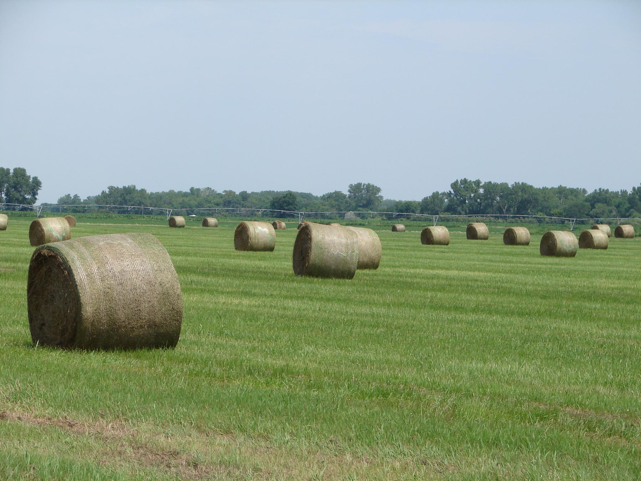 Hay Bales in Sherman County NE Mike McCann Nebraska Farm Broker