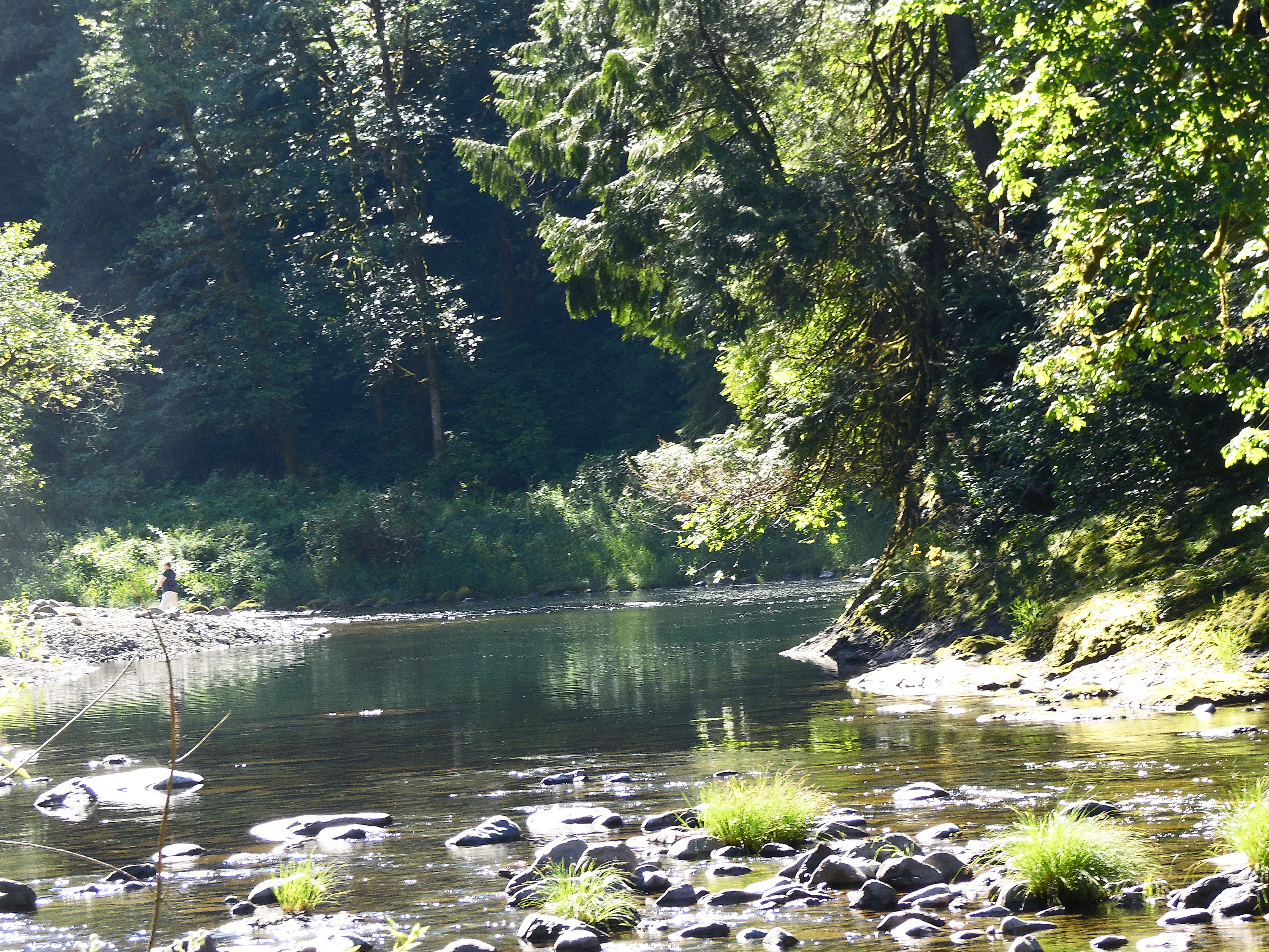 Fun facts about living on the washougal river in washin for Washougal river fishing