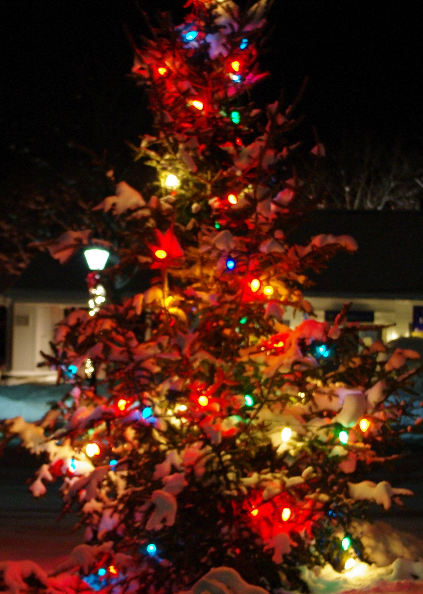 New Milford CT Christmas trees on the green