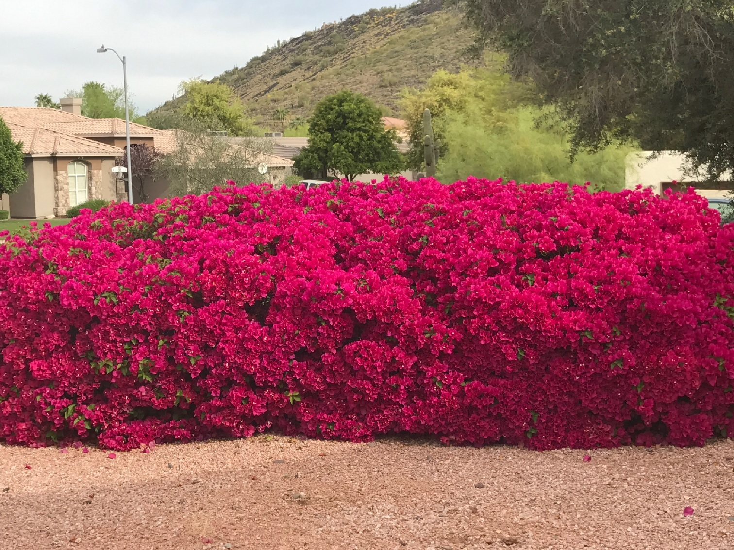 Phoenix is Blooming with Color!