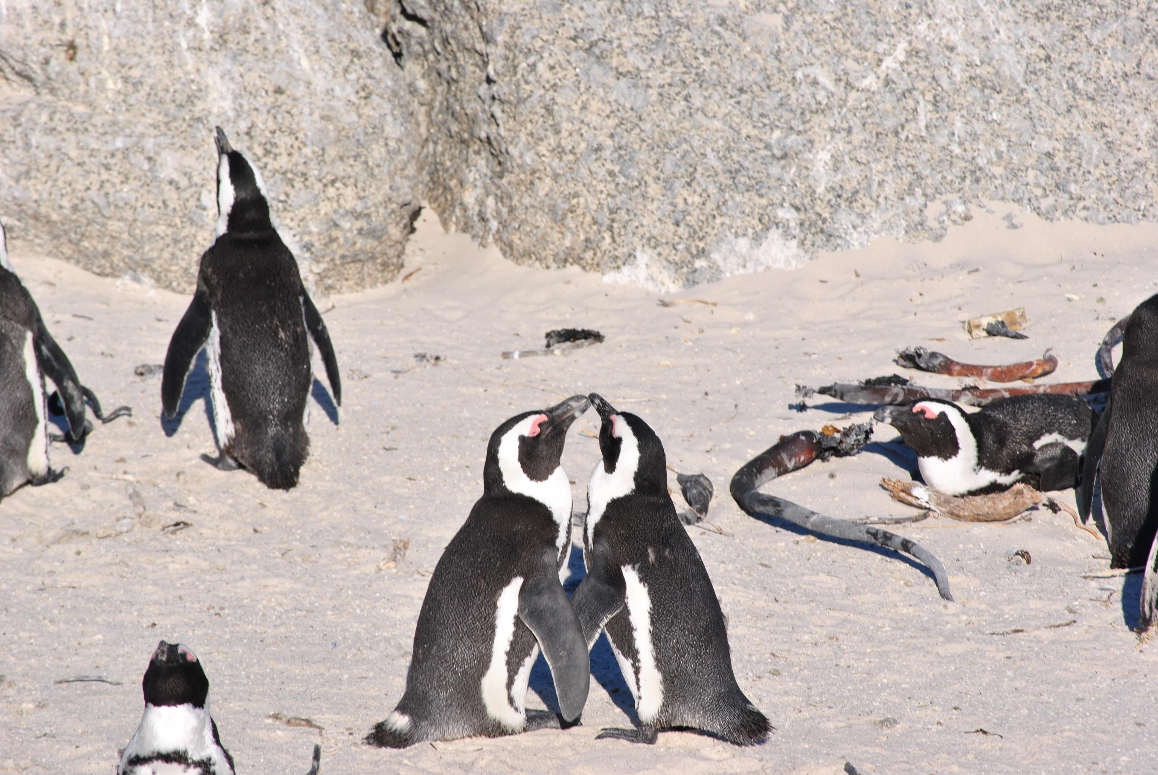 walk like penguins in love