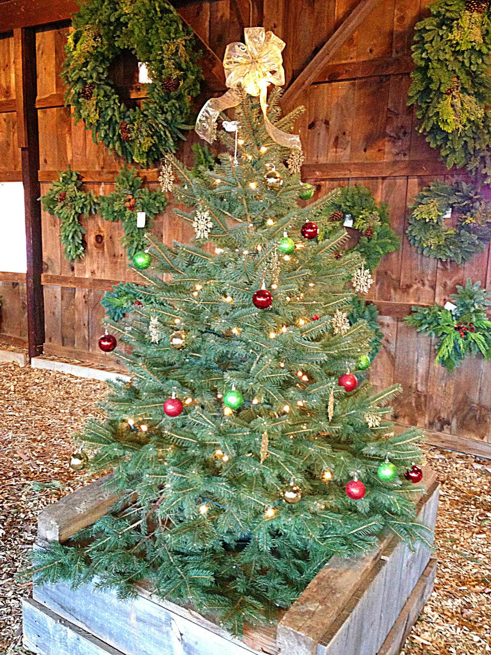 Christmas Tree Season Begins at Jones Farms and Fairview ...
