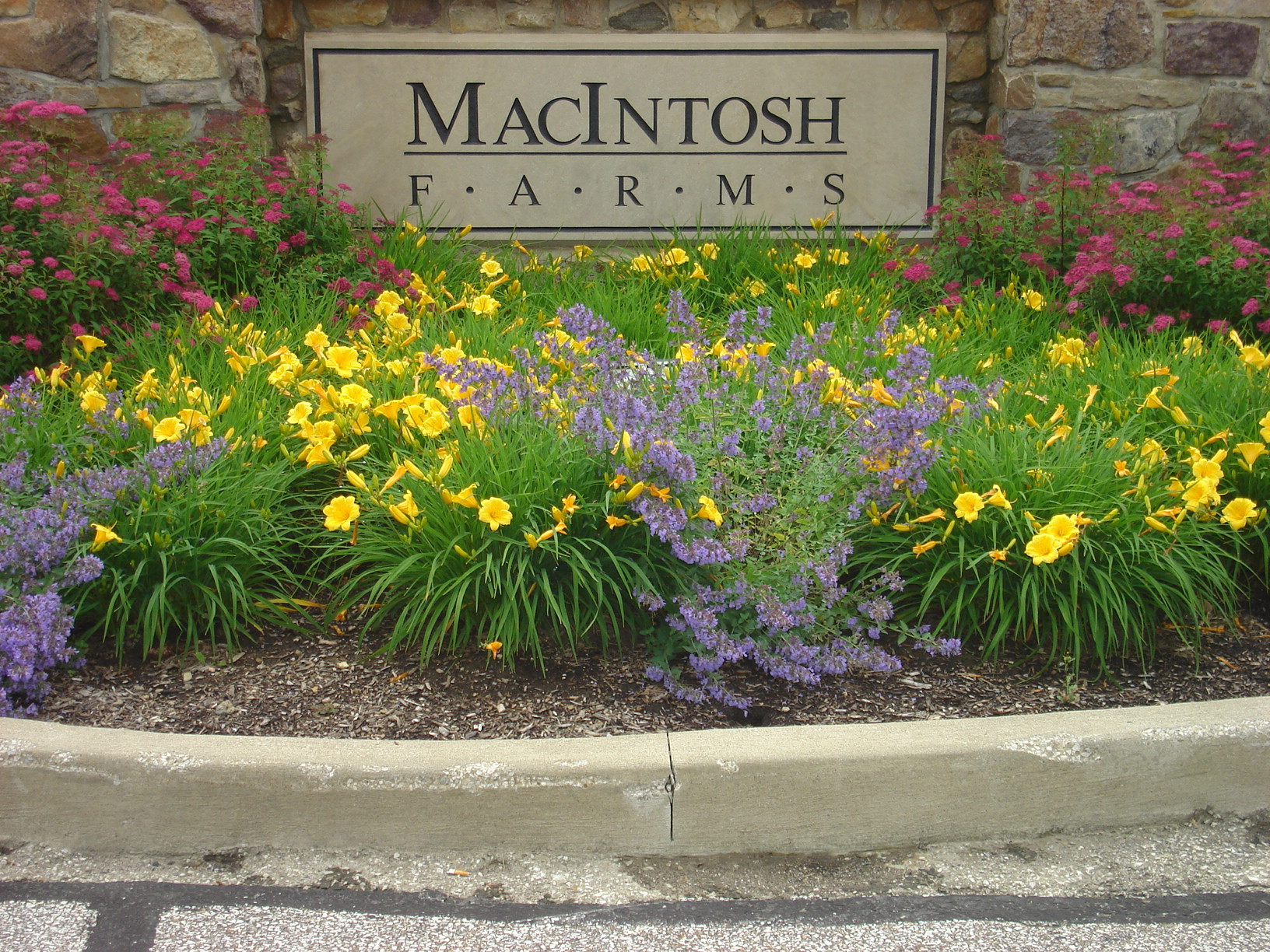 macintosh farms