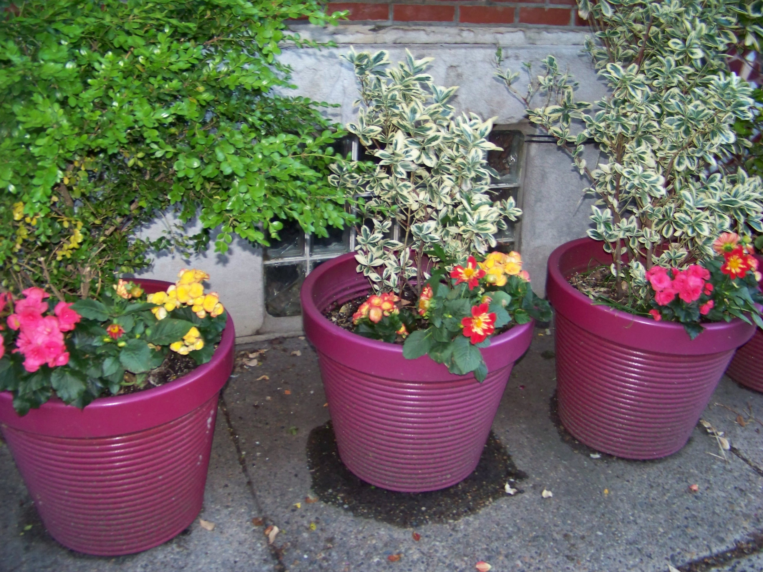 Decorating With Flowers in Urban Areas Where There is No Front Yard
