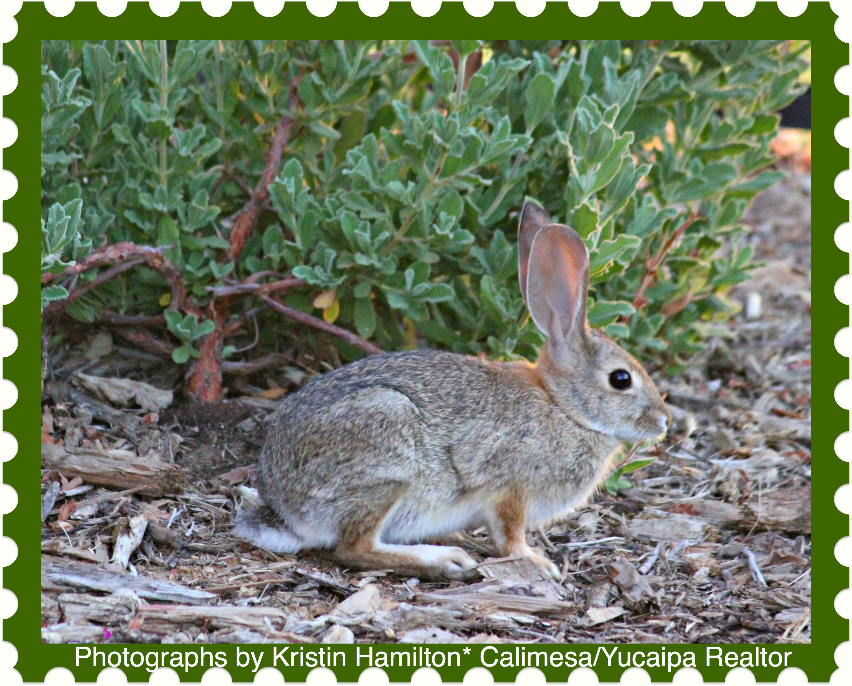 Rabbits Living in My Front Yard but Please Don't Eat My ...