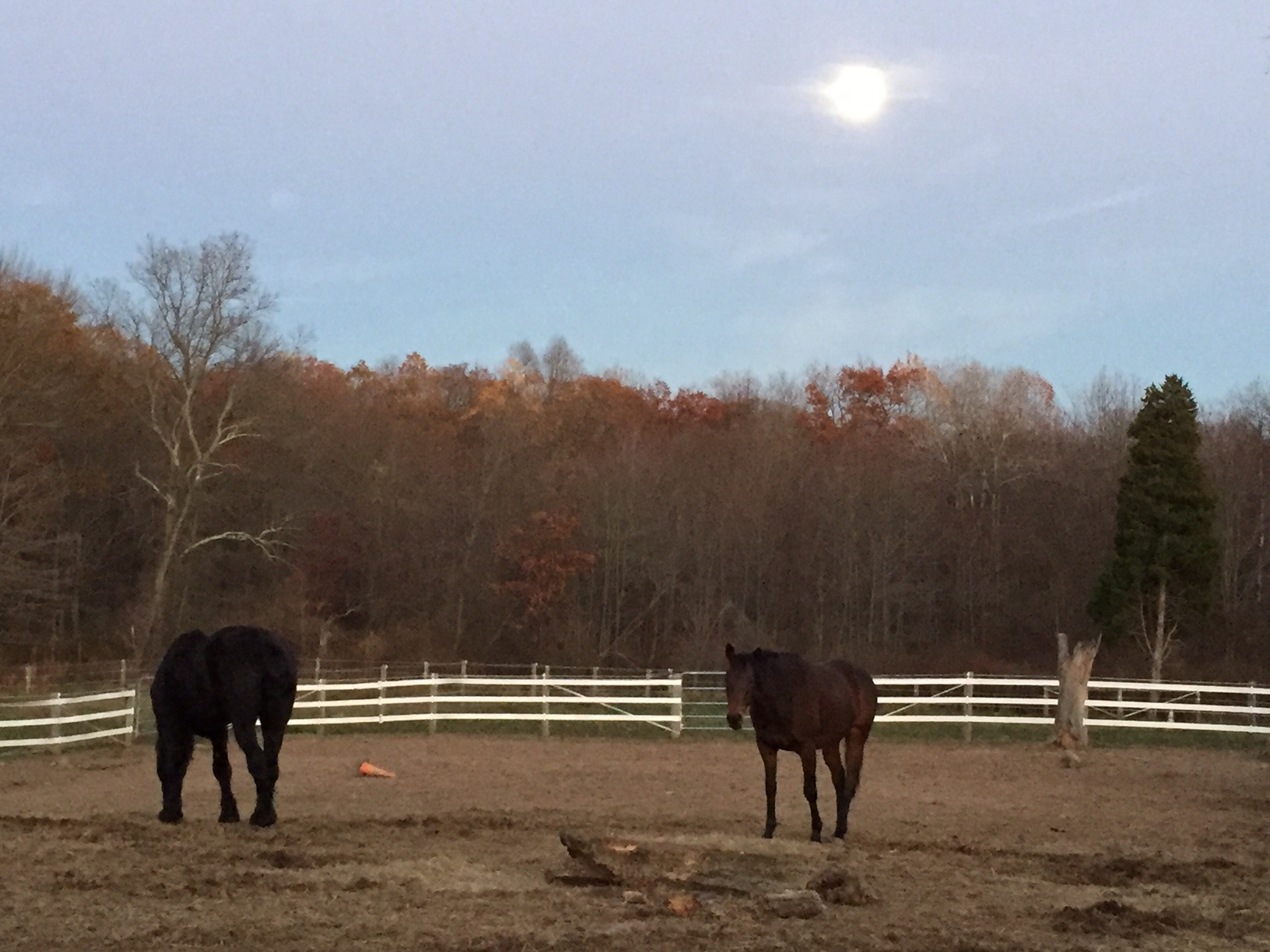 Horses grazing under the super moon