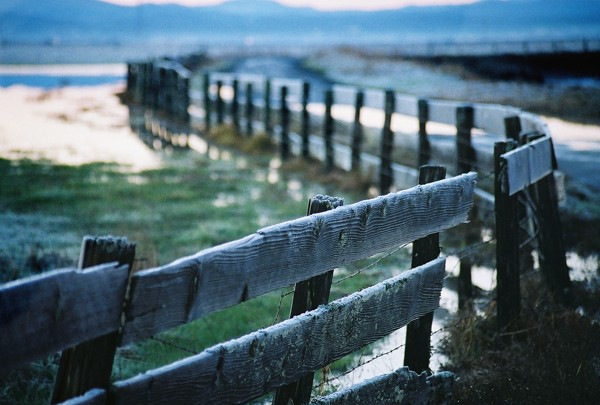 Wood pasture fencing