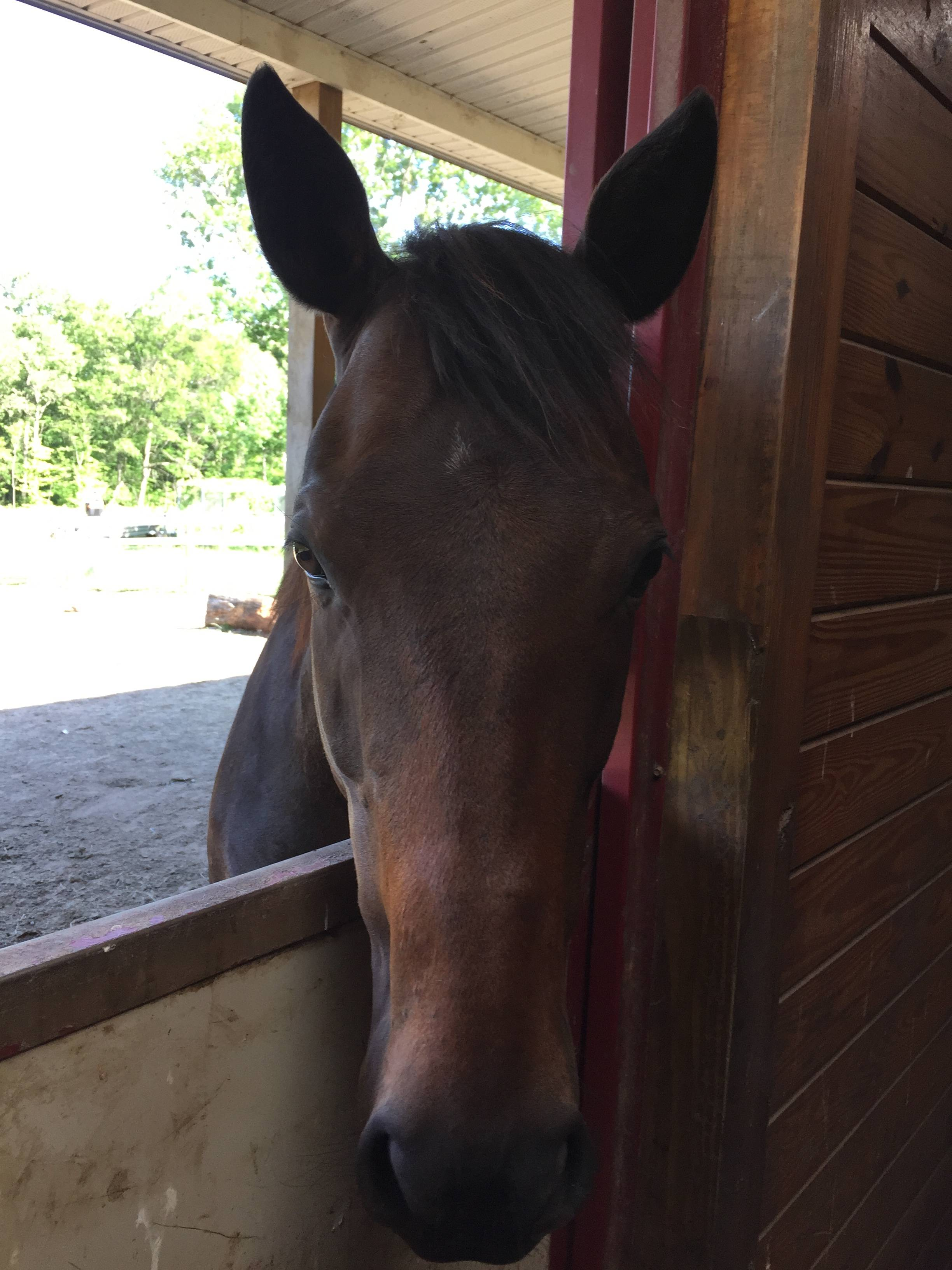 Caring For Horses In Extreme Heat