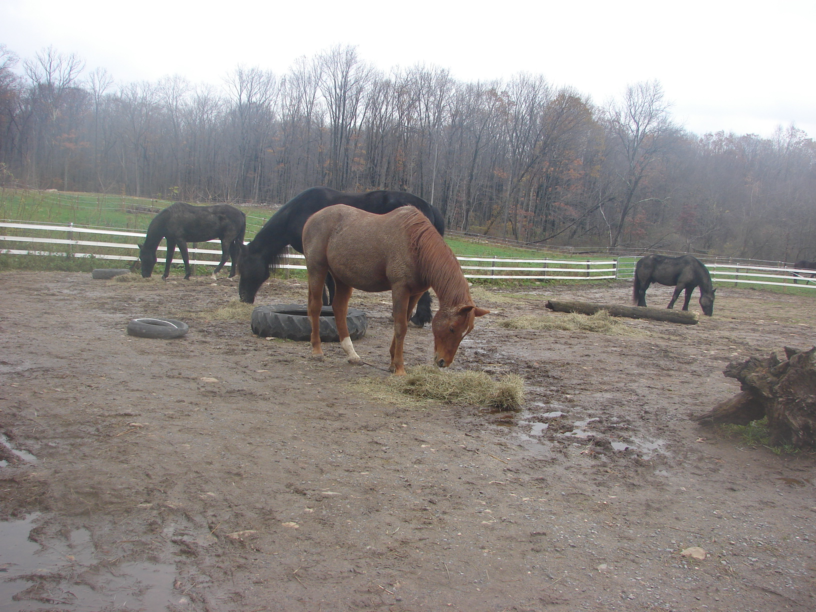 What Is A Sacrifice Area on Horse Properties and Why is It Needed?