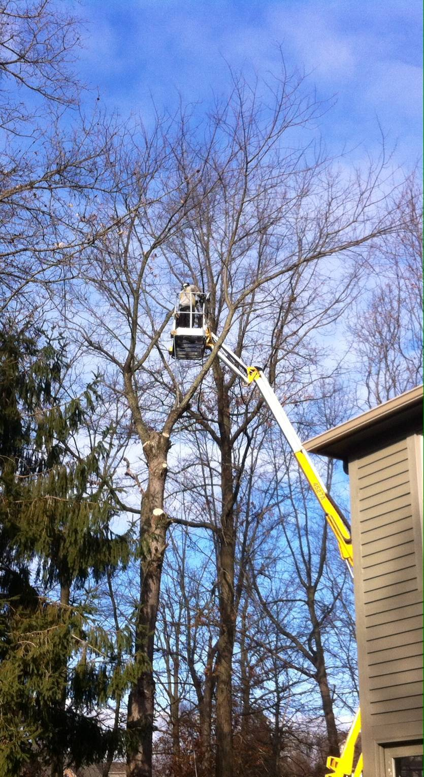 Bellingers Tree Removal Service Lafayette Indiana