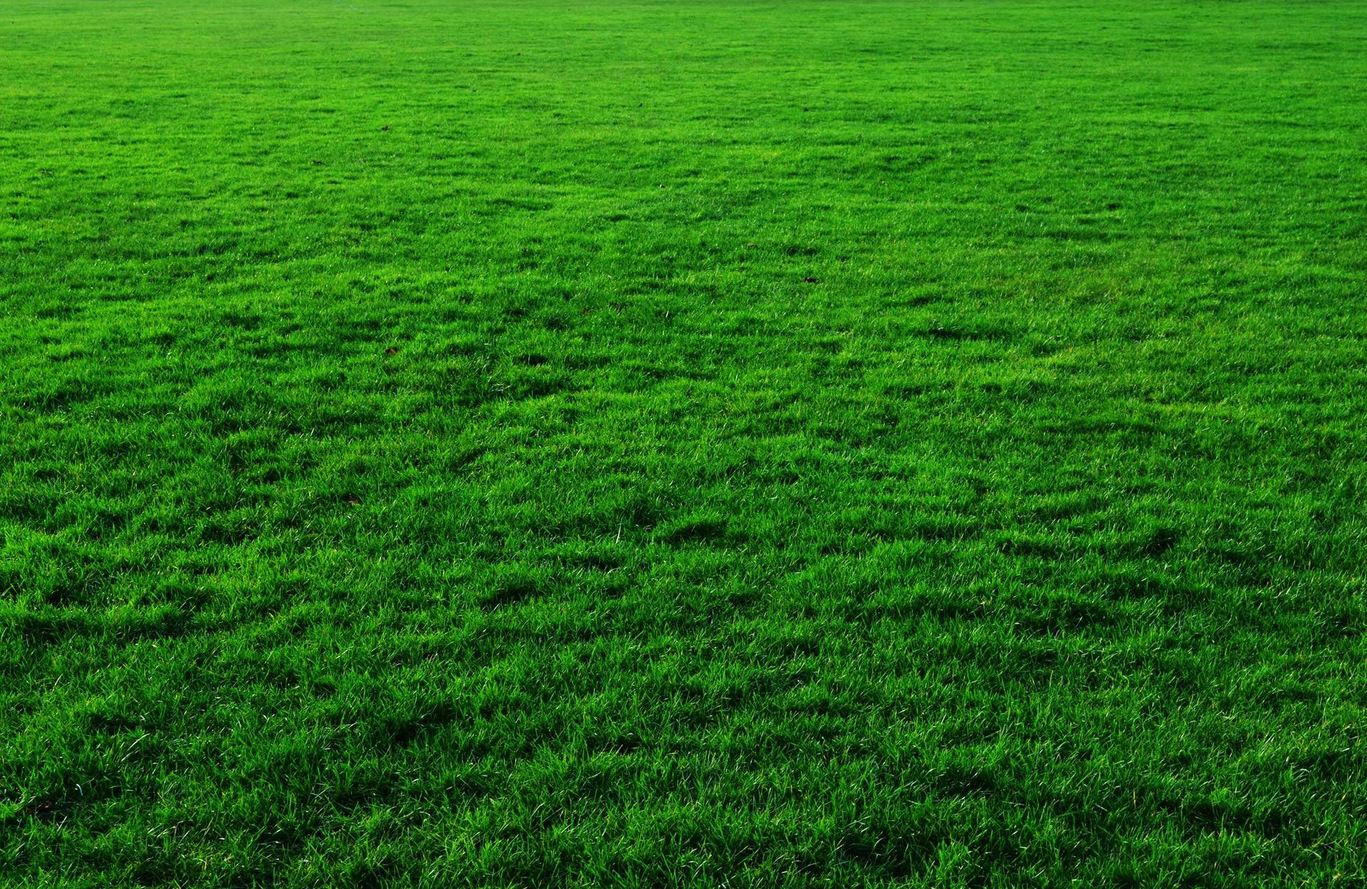 Artificial turf versus real grass in colorado for Pretty grass