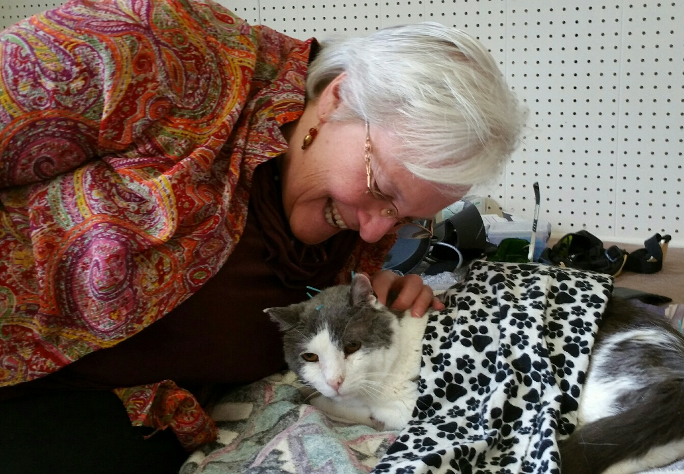 Dr. Verna giving Gray Kitty accupuncture and Beemer (electromagnetic therapy)