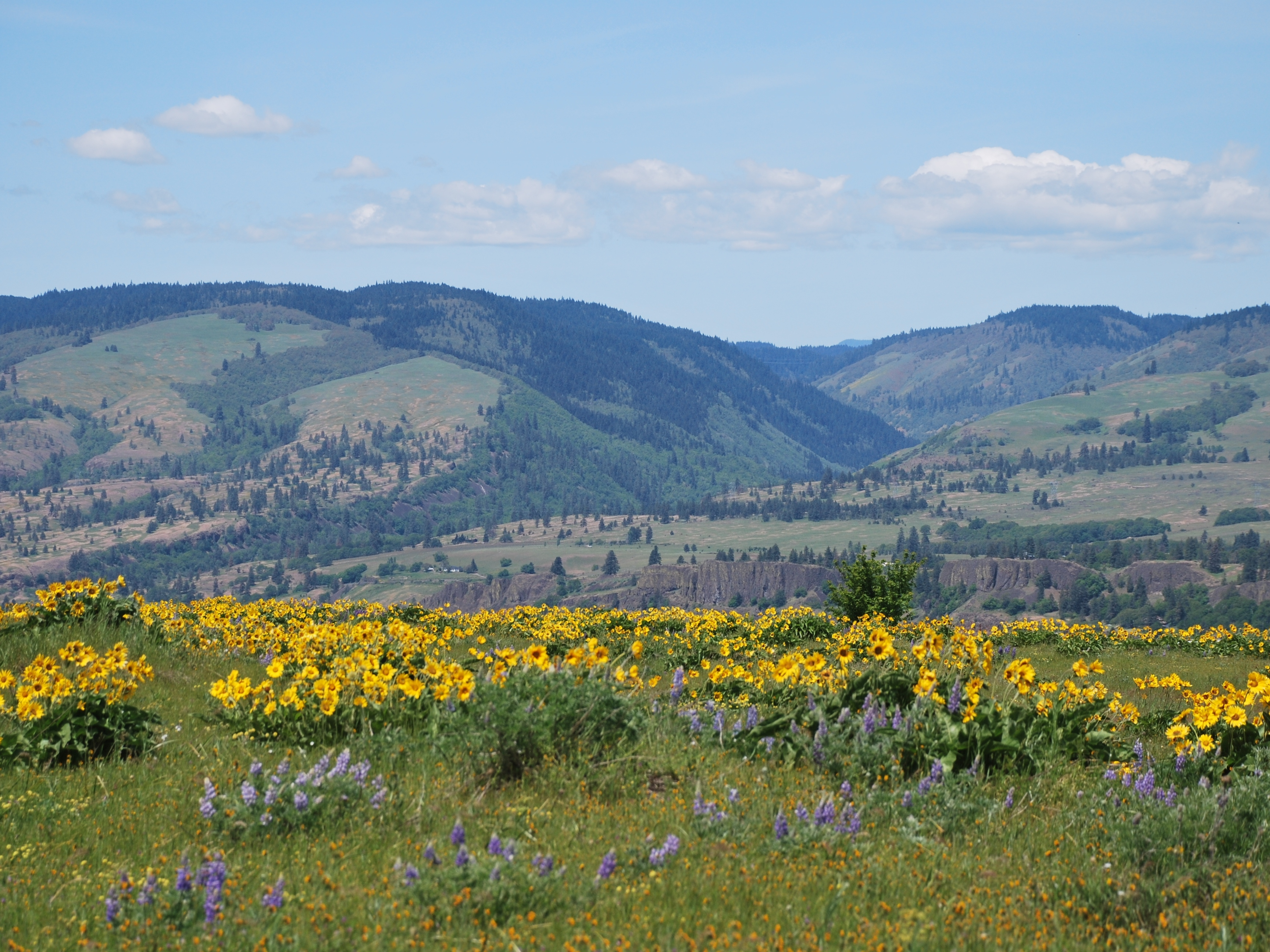 Early May 2019 Wildflowers blooming in the Columbia River Gorge