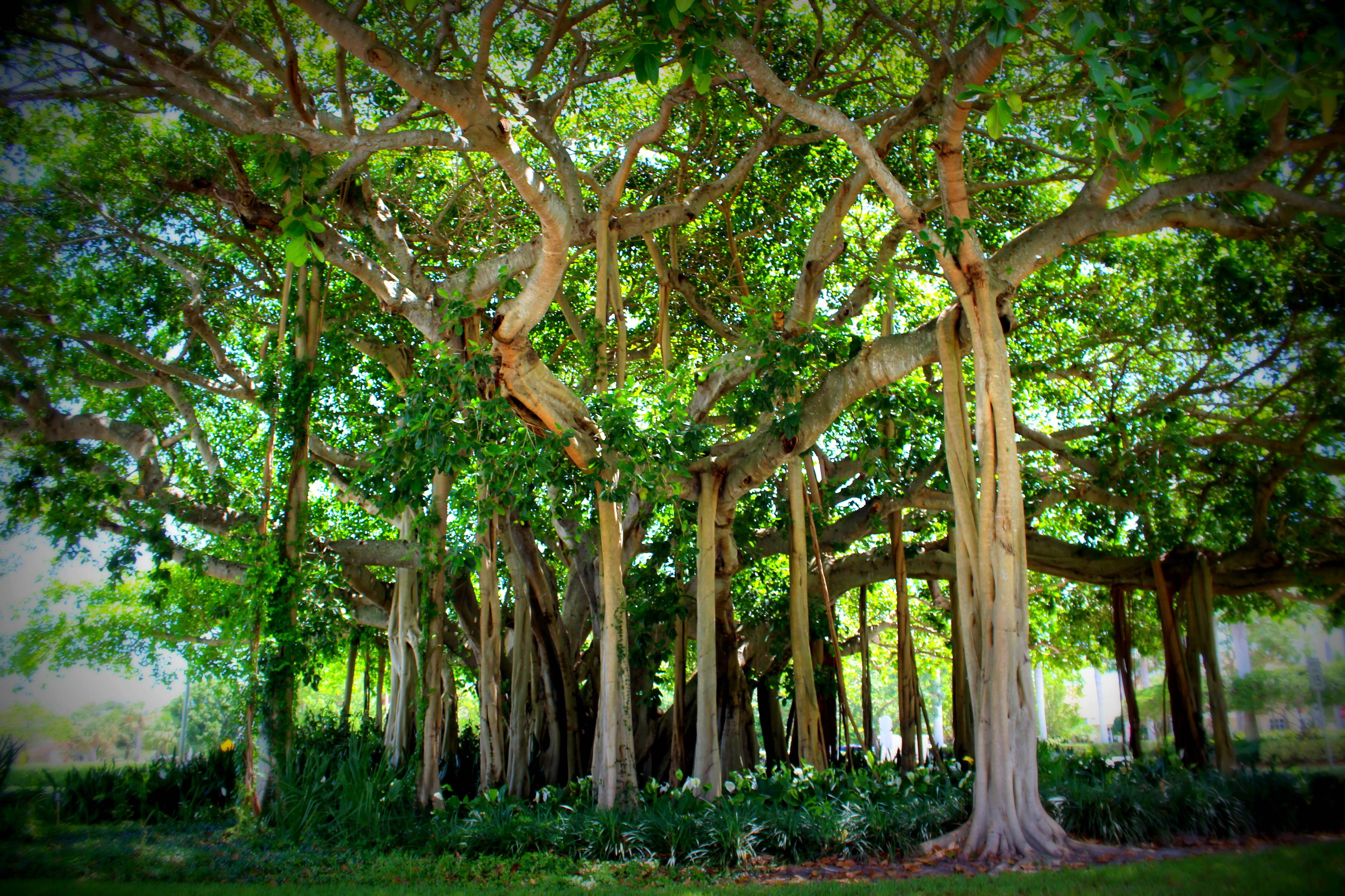 Wonderful Pga Blvd Palm Beach Gardens Pictures Inspiration ...