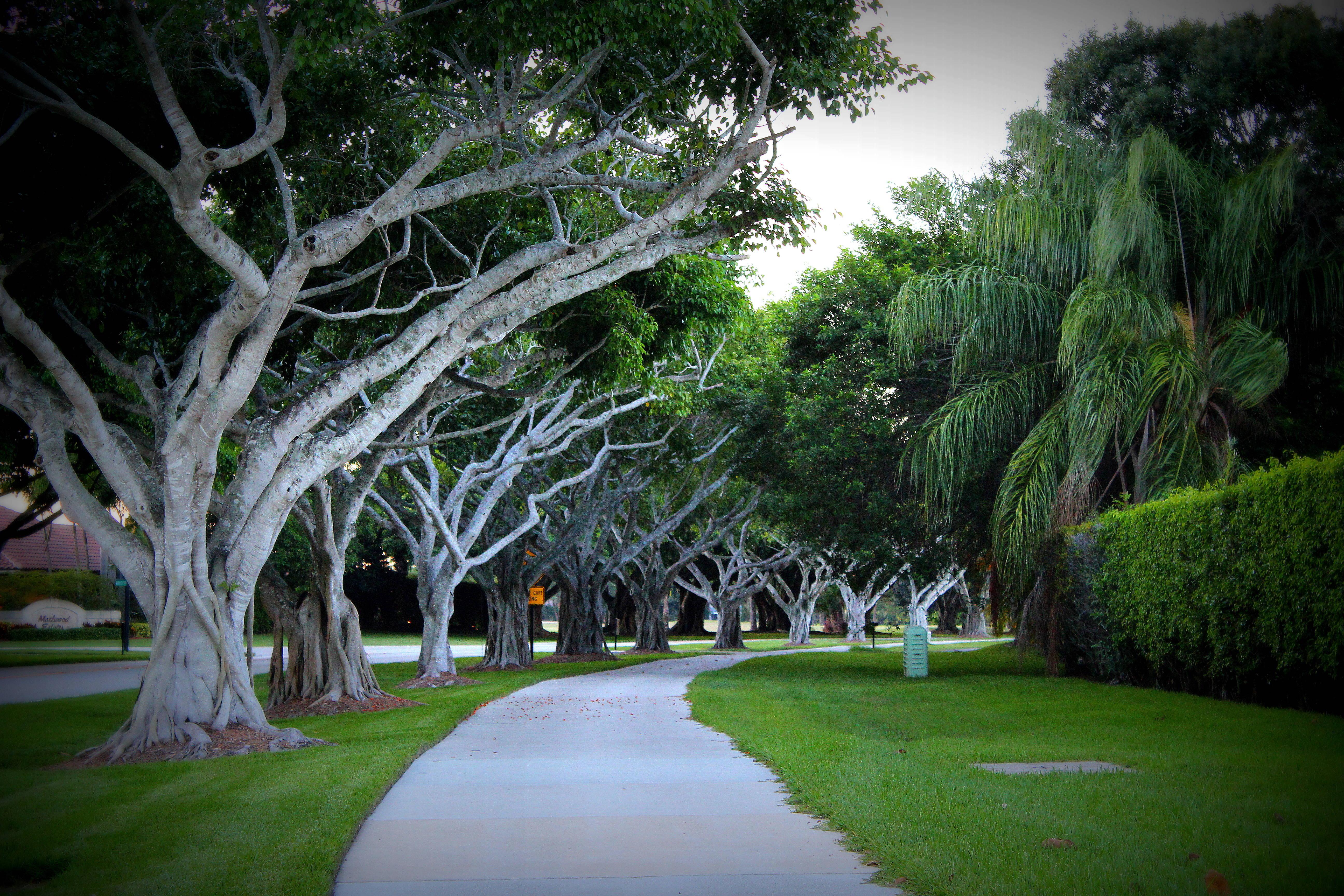 Wordless Wednesday : PGA National & Palm Beach Gardens