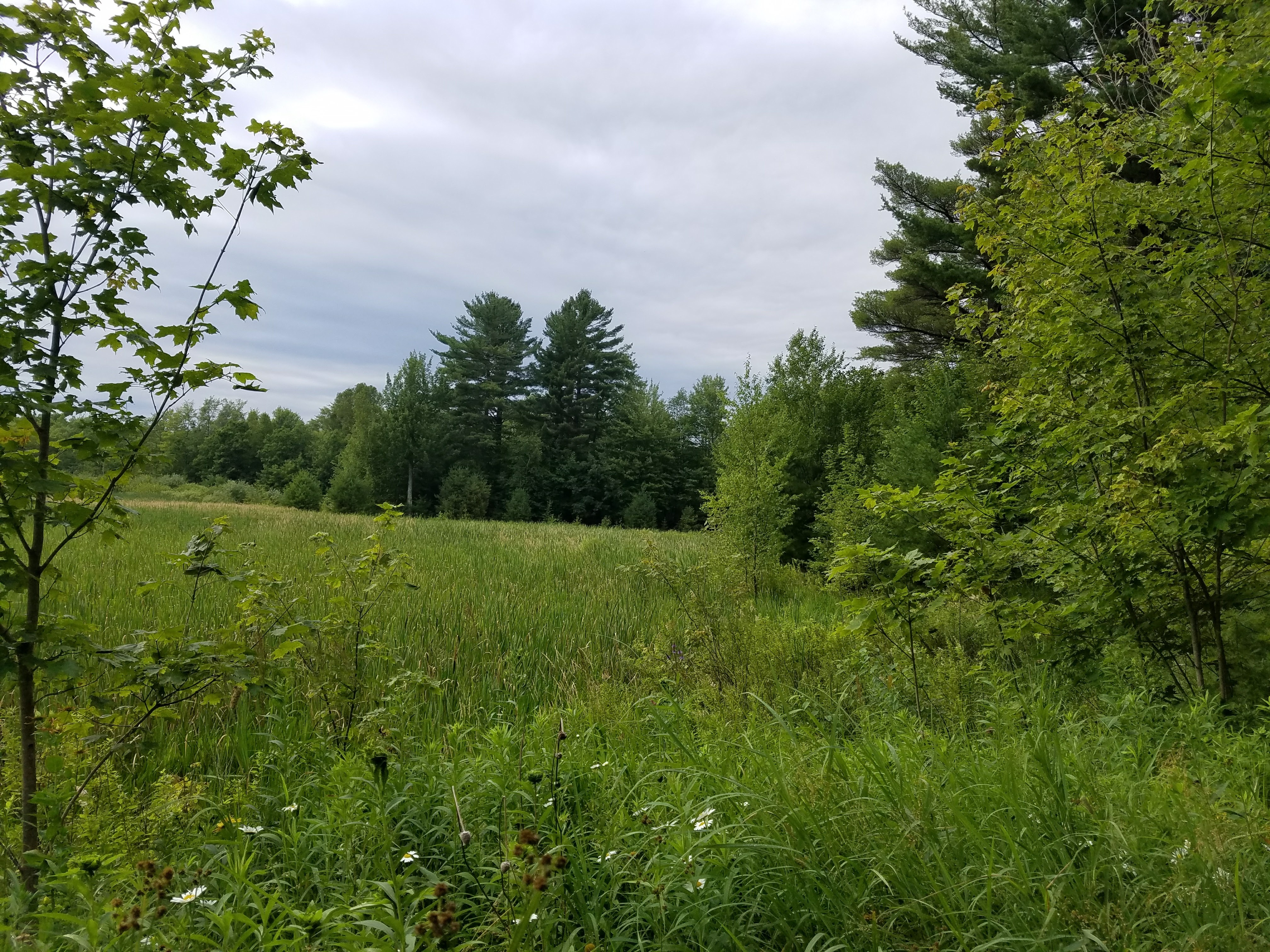 WINNEBAGO County Forestland
