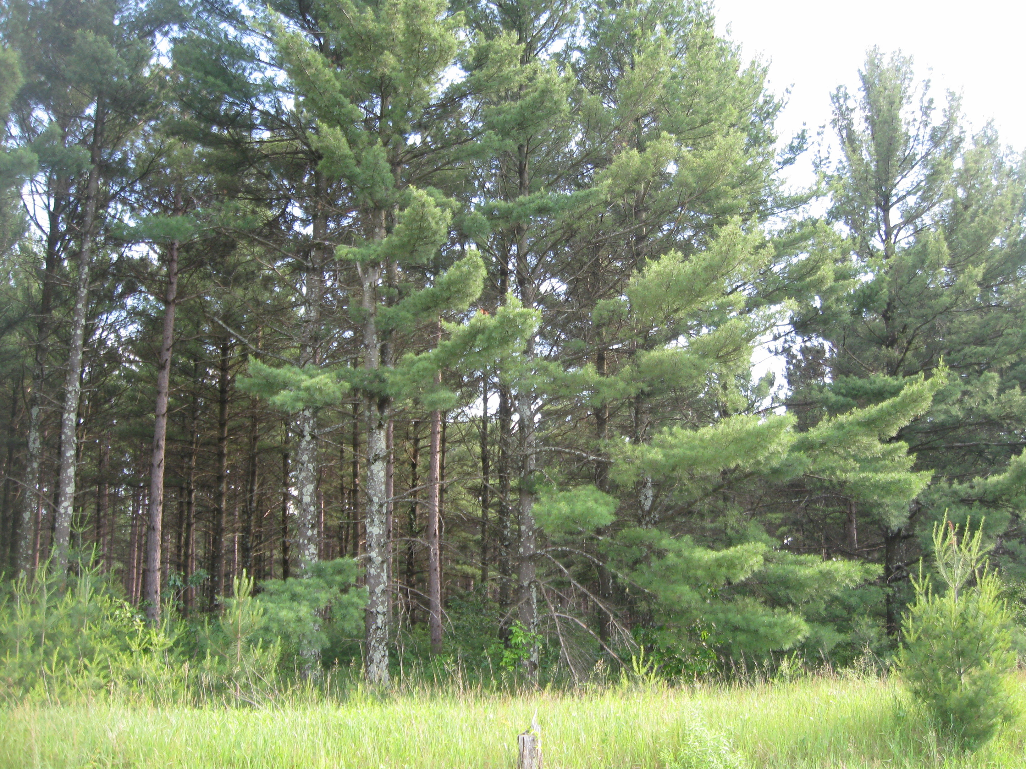 Adams County Forestland