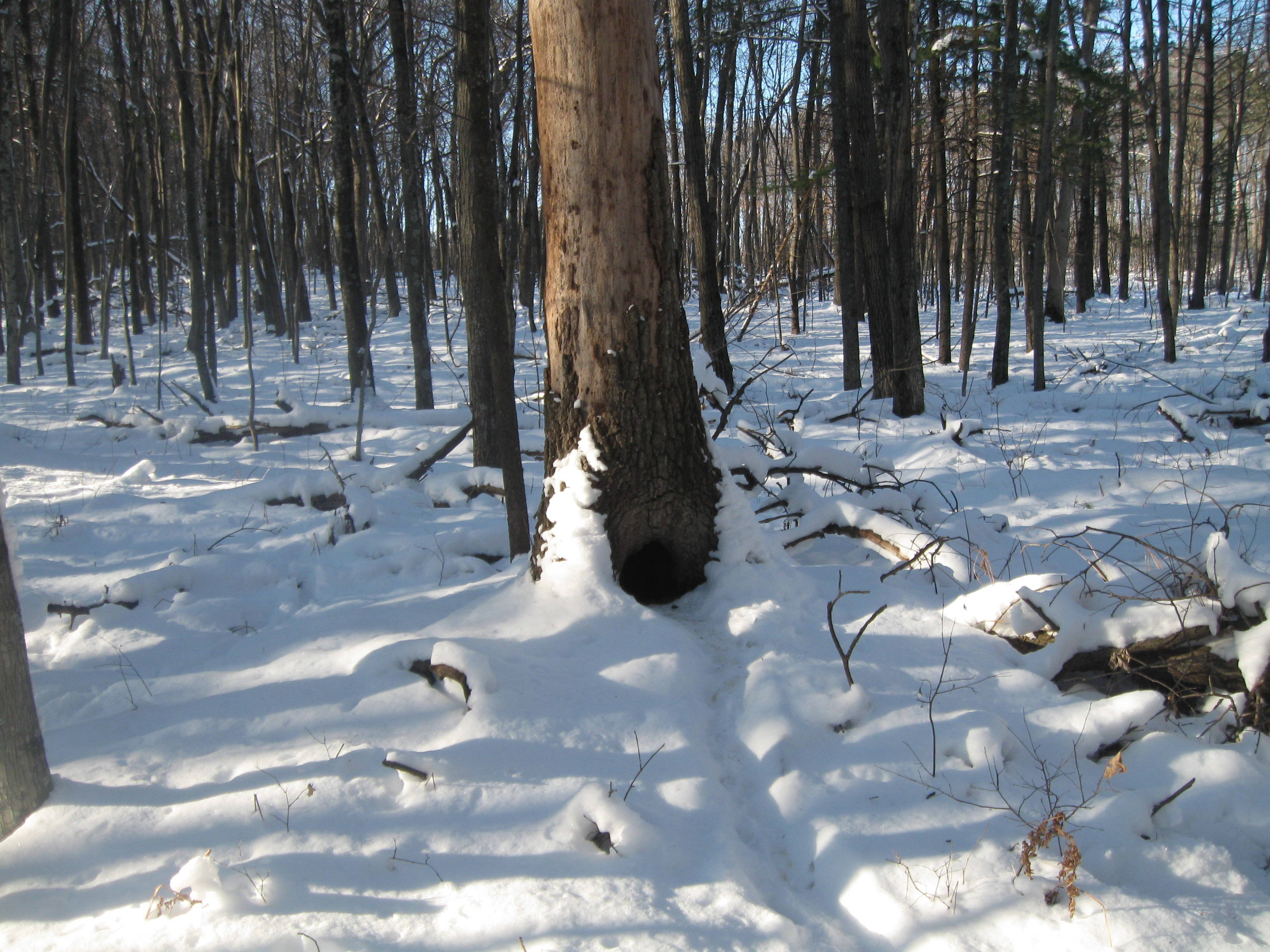Wisconsin Winter Forests
