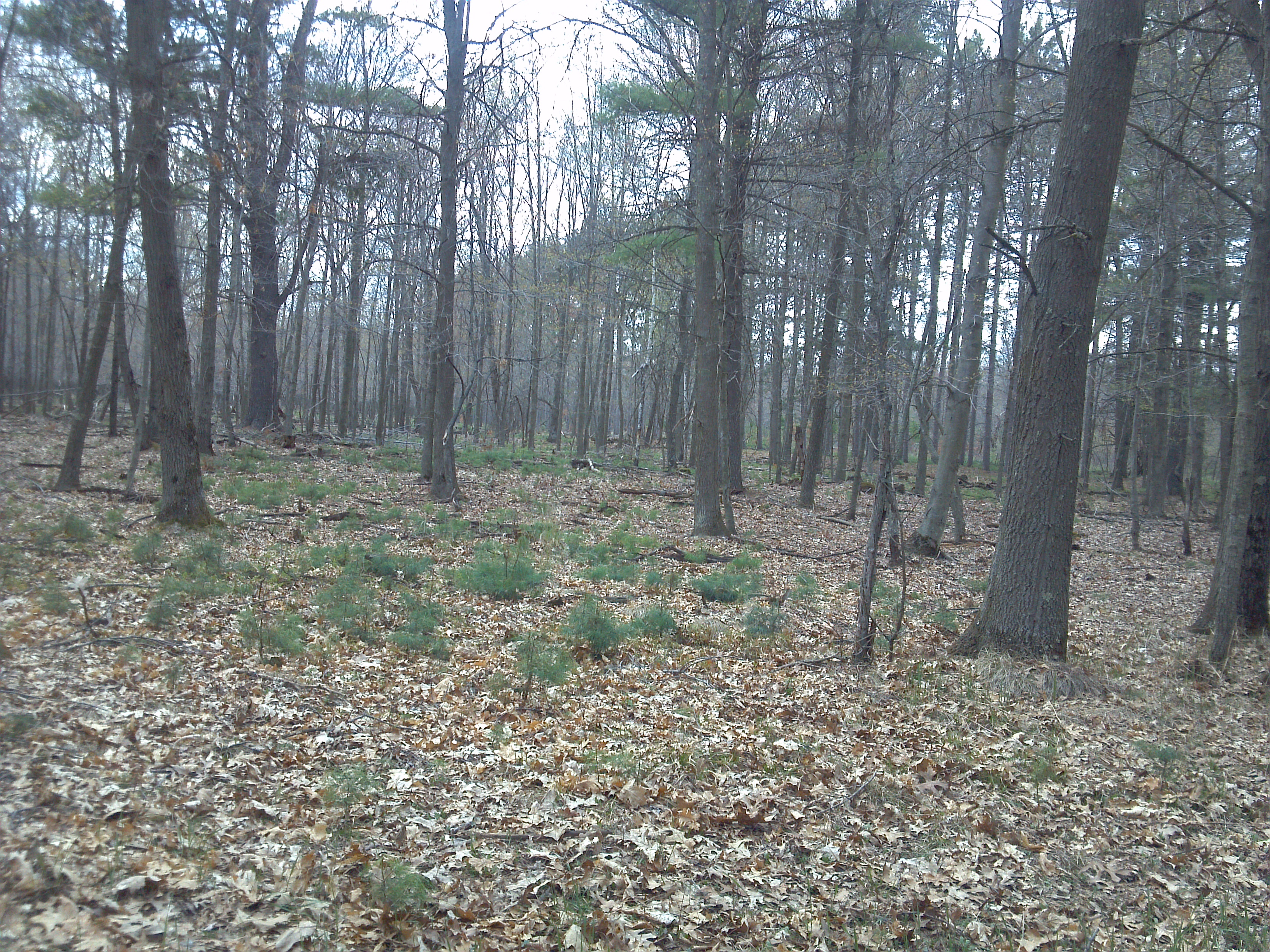Portage County Forestland