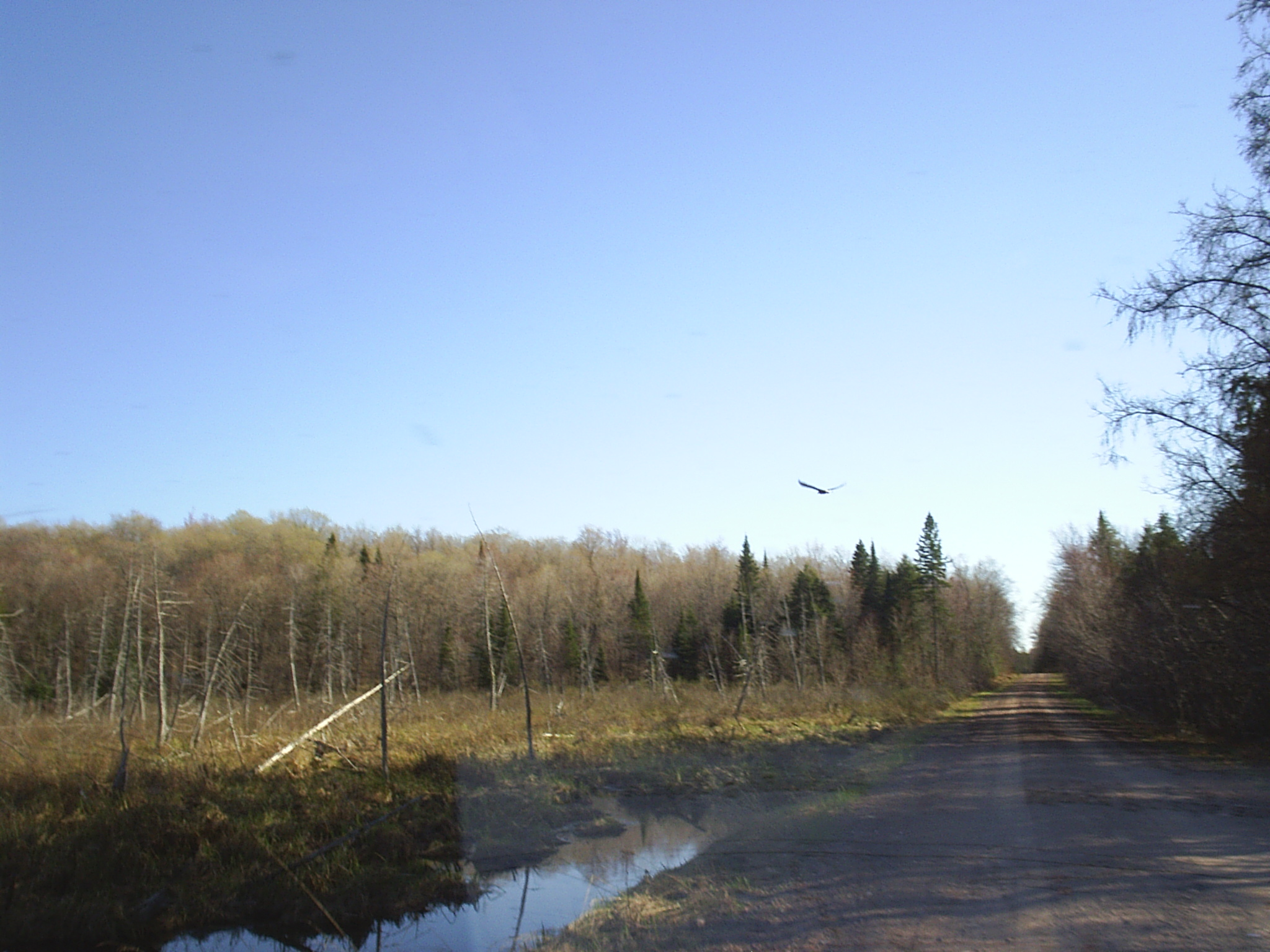 Woodland Management Service - eagle in gogebic co michigan