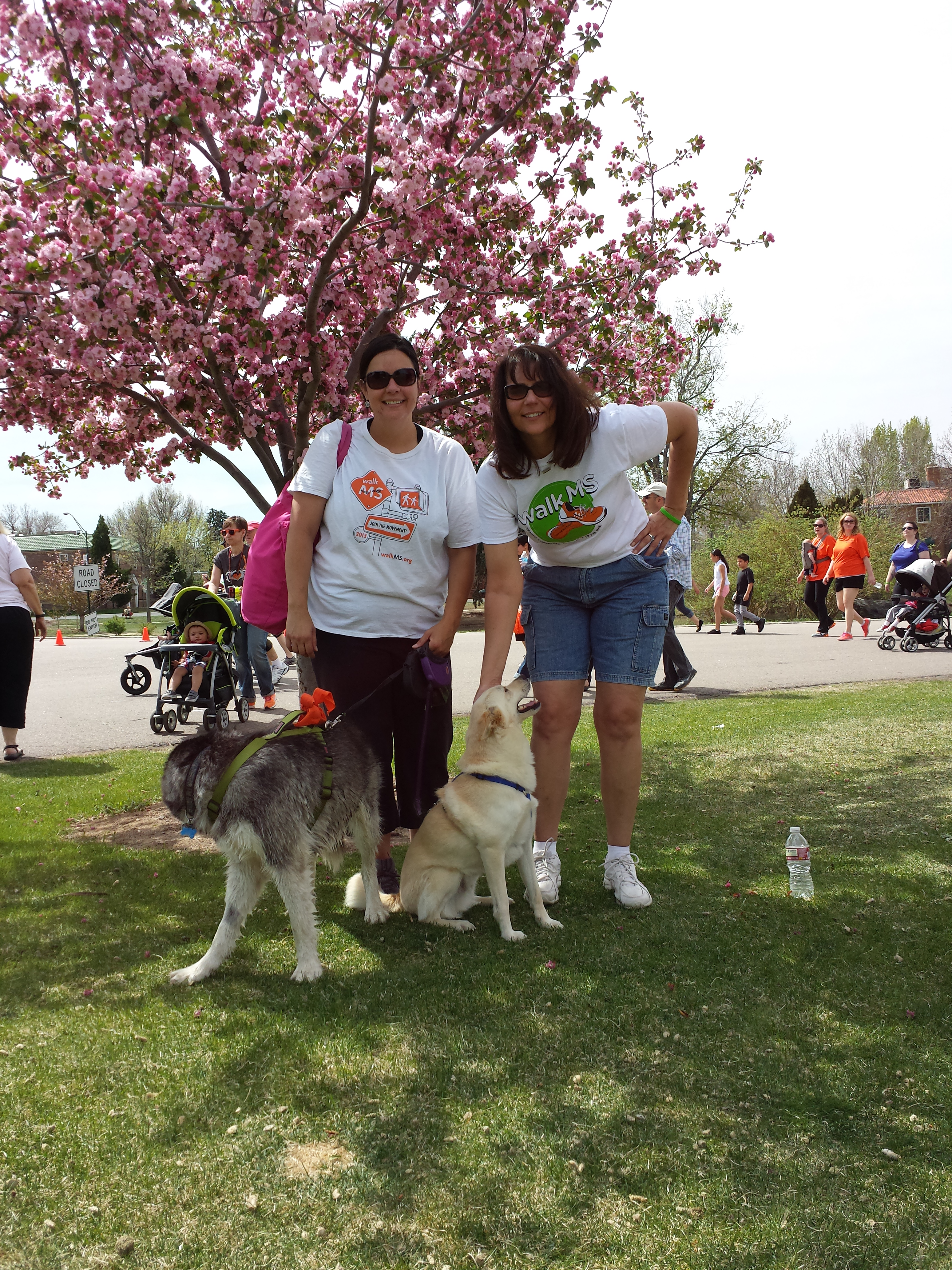 MS Walk 2014 - Denver