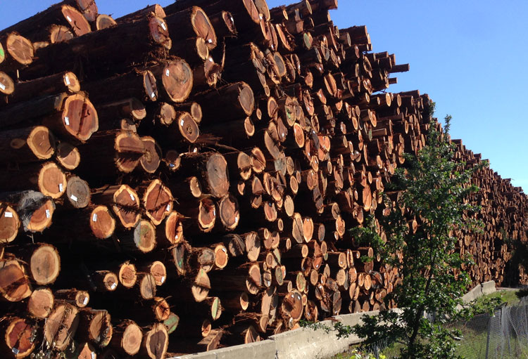 Redwood logs stacked in cloverdale