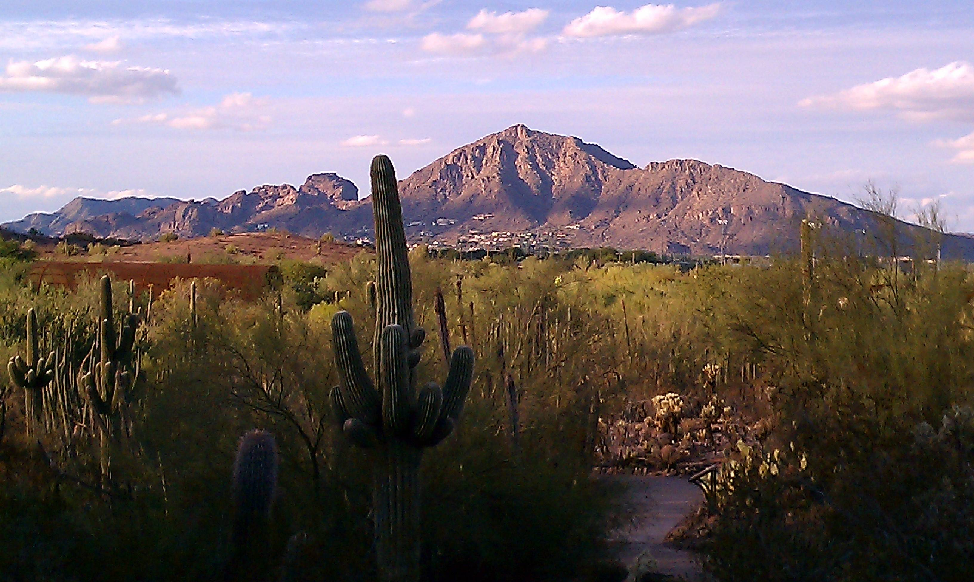 10 Best Places to See Wildflowers in Arizona