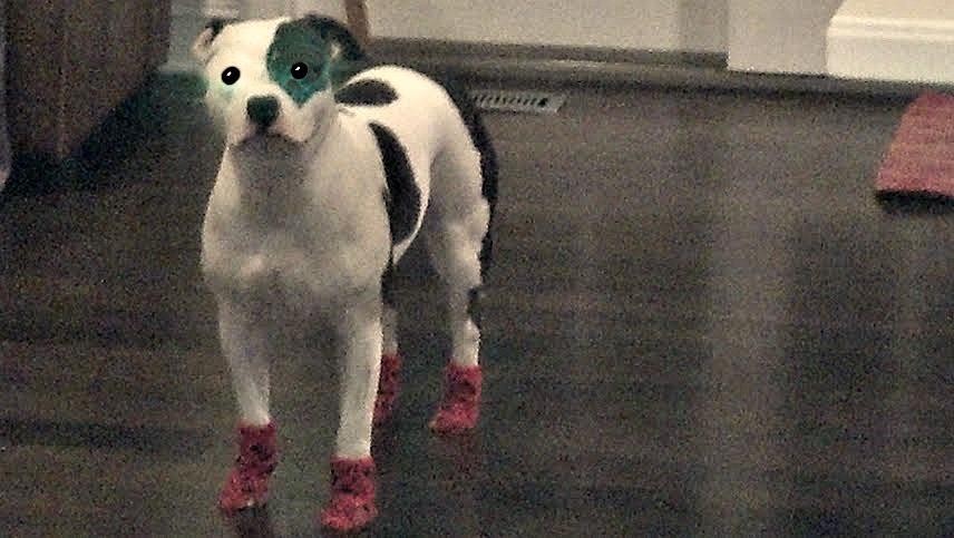 doggies socks on hardwood floors