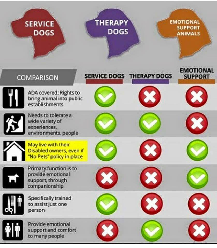 Service Animal Vs Emotional Support Animals