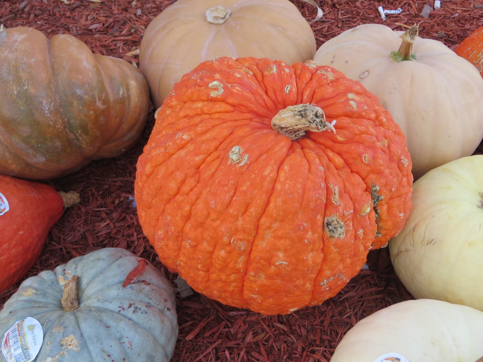 Boyds Pumpkin patch