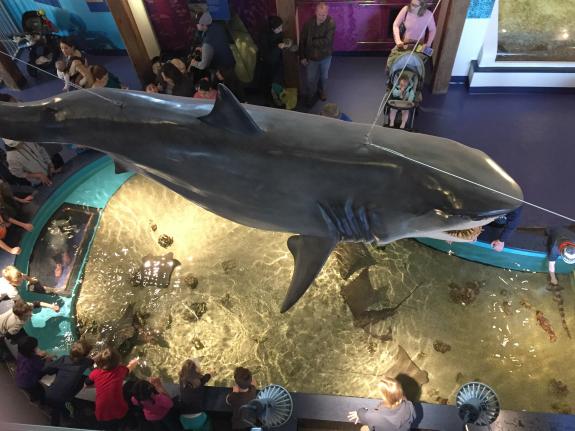 The Maritime Aquarium At Norwalk Ct