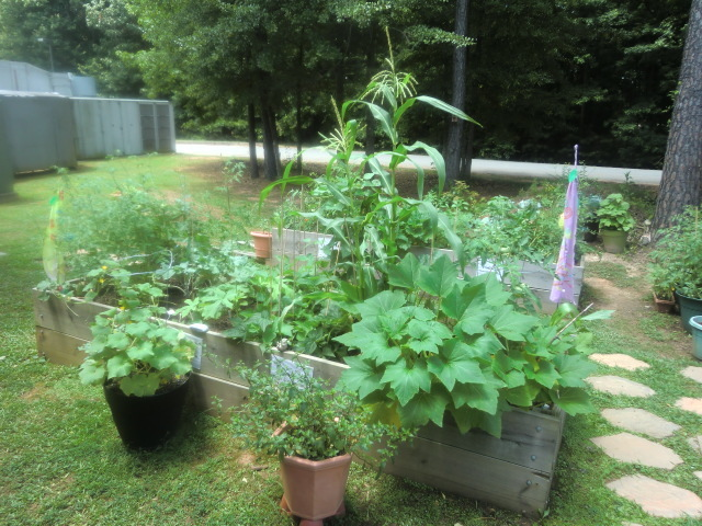 growing vegetables at Frank Bailey Community Garden