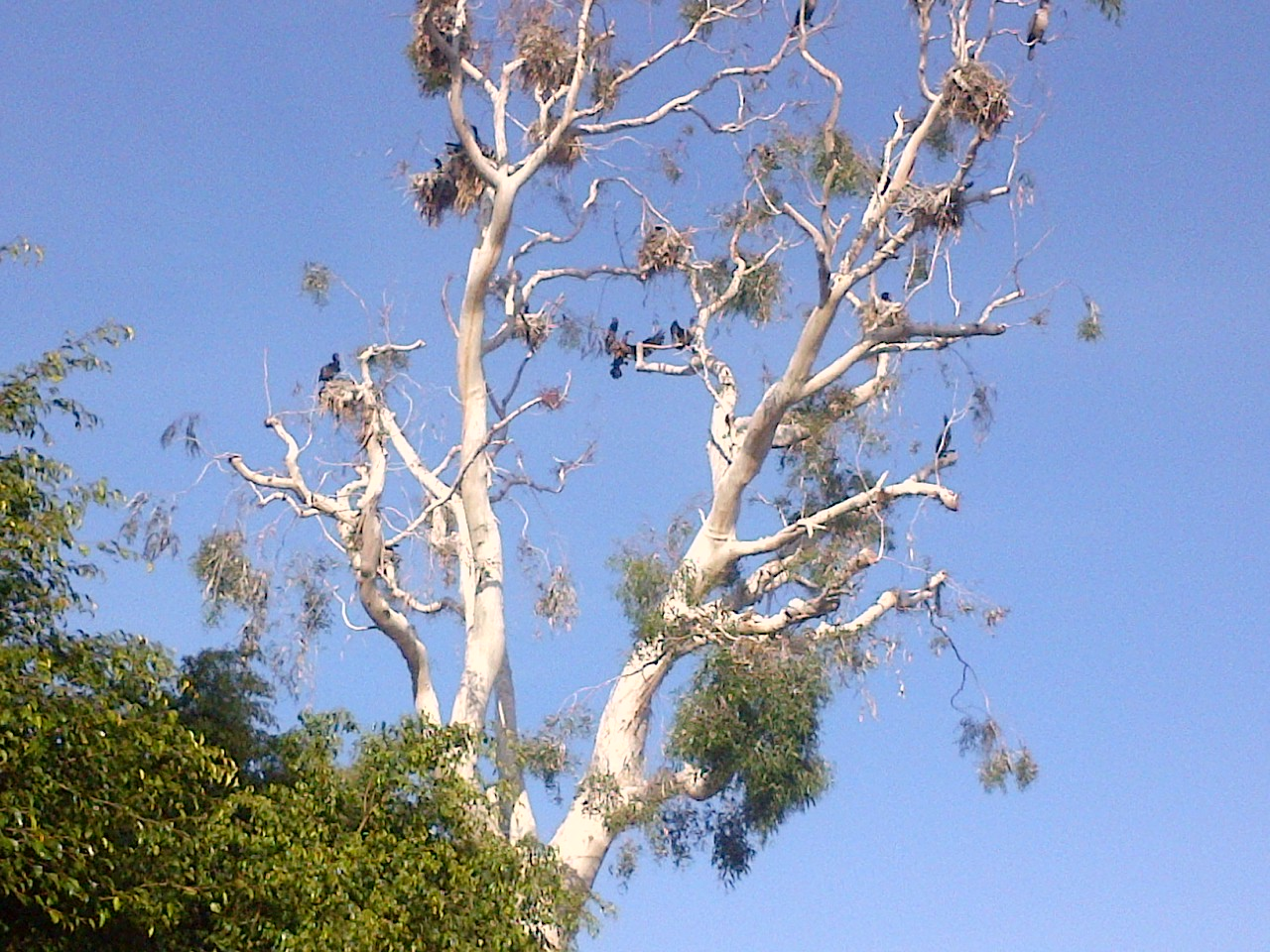 The Blue Herons in Marina Del Rey,CA Endre Barath
