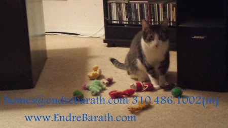 Pet Friendly Realtor in the Greater Los Angeles area, Endre Barath