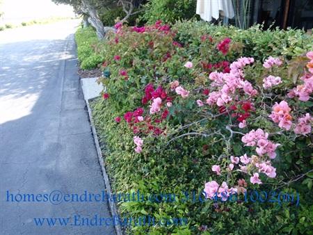 Spring in Marina Del Rey, CA, Endre Barath