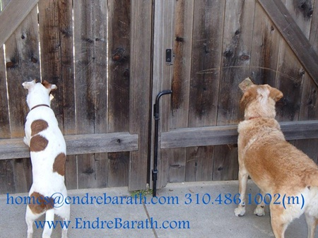 Waiting For Company, Endre Barath, Los Angeles Realtor, Pet friendly Realtor