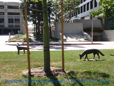 animals in century city, endre barath