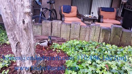 duck @ Mariner's Village, MDR, Endre Barath