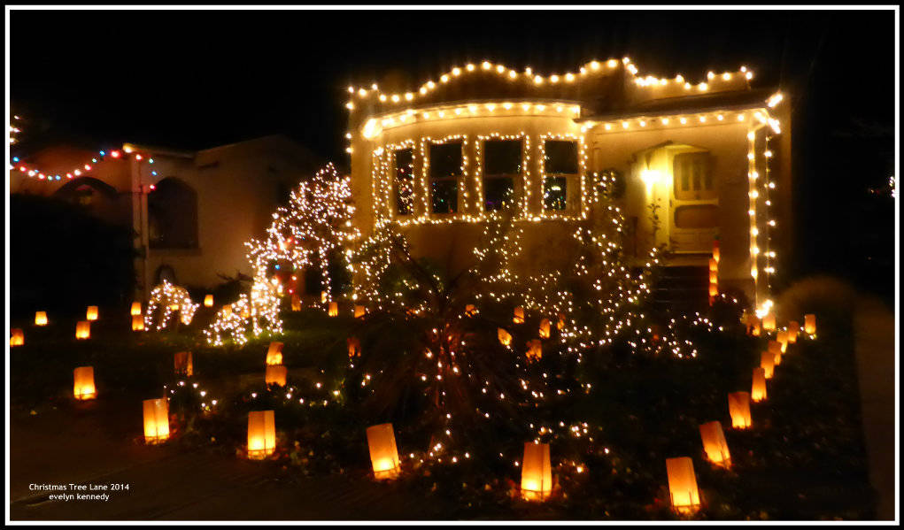 - Christmas Tree Lane In Alameda