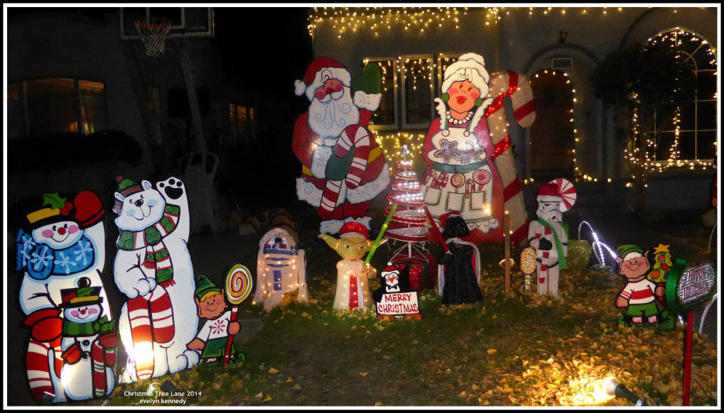 Christmas tree lane in Alameda, CA photo by evelyn kennedy