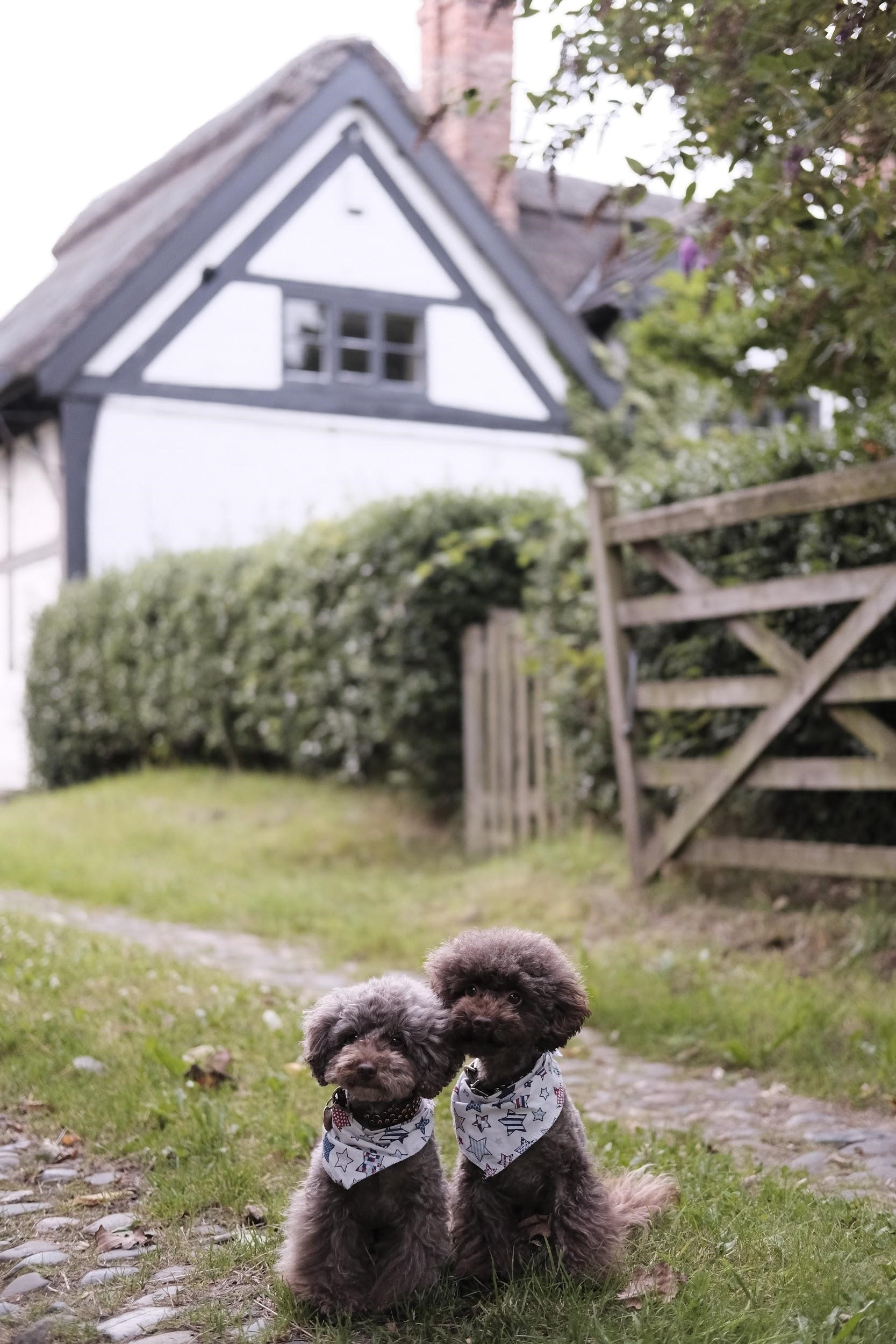 7 quetions every dog owners needs to know when buying a home