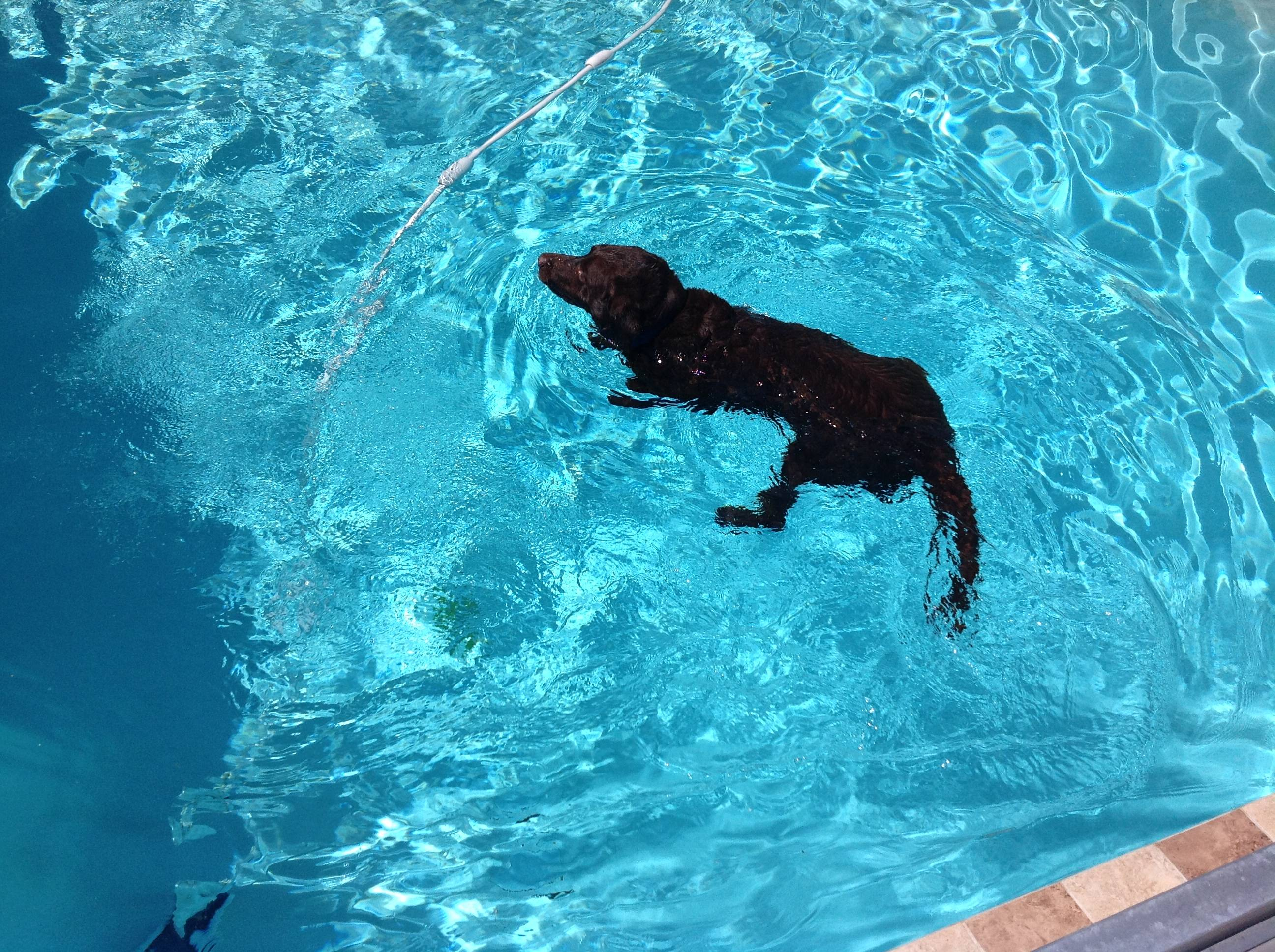 zeke swimming