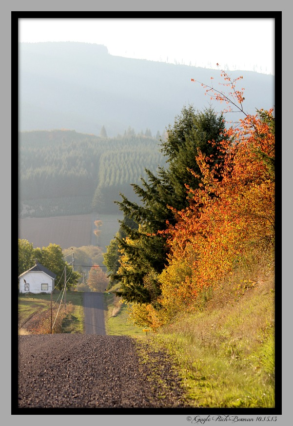 Vineyard in Forest Grove OR-Gayle Rich-Boxman 2014 Copyrighted All Rights Reserved
