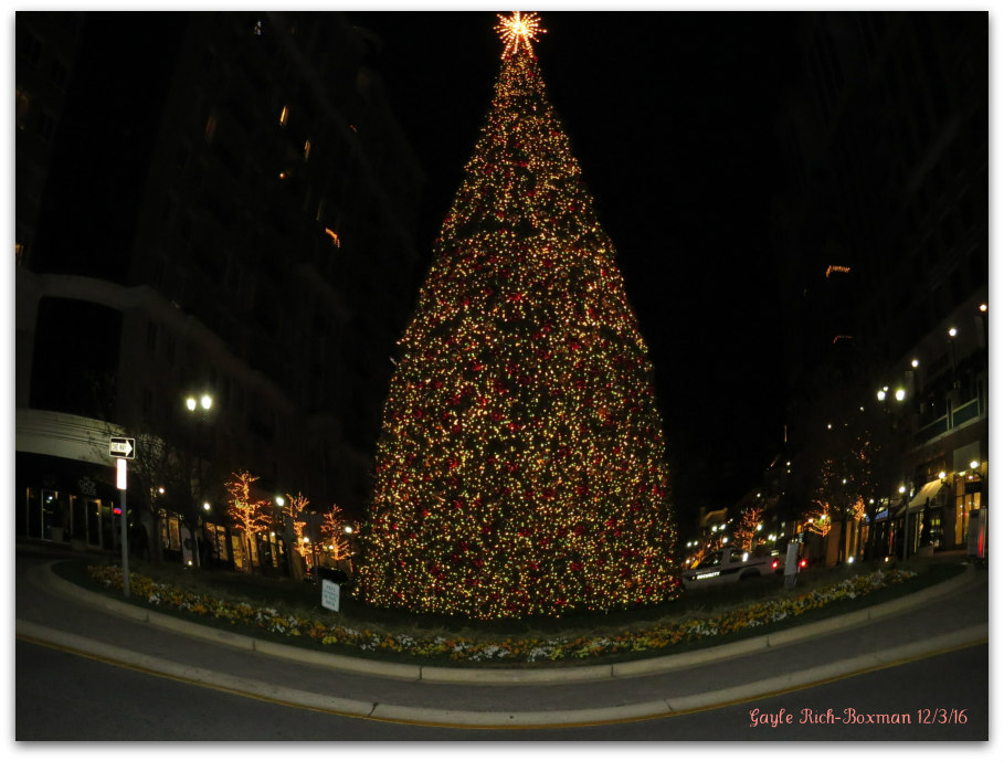 Christmas Tree in front of Brio Tuscan Grille MD
