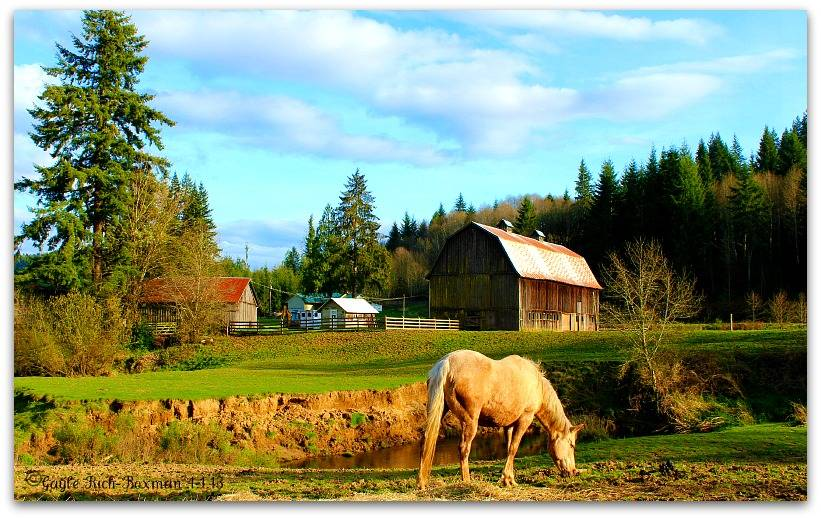 Summer at the Berg Farm-Gayle Rich-Boxman Copyrighted All Rights Reserved 2014