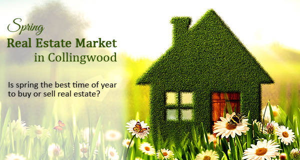 Collingwood Real Estate Market