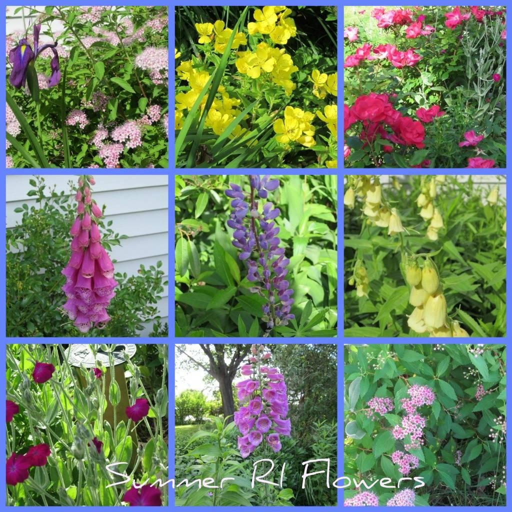 ri coastal real estate home flowers